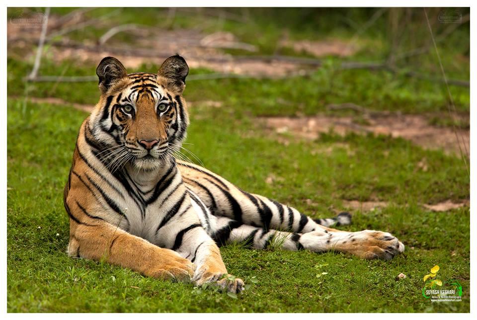 Chandini Tigres