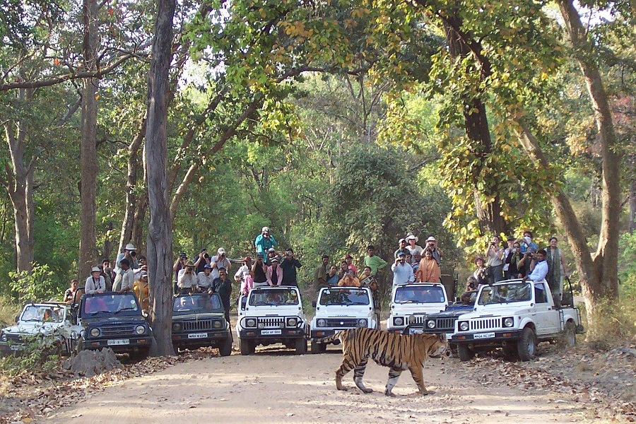Tiger sighting tours to Bandhavgarh