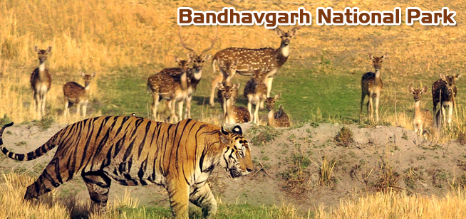 Myths & Facts about Bandhavgarh National Park