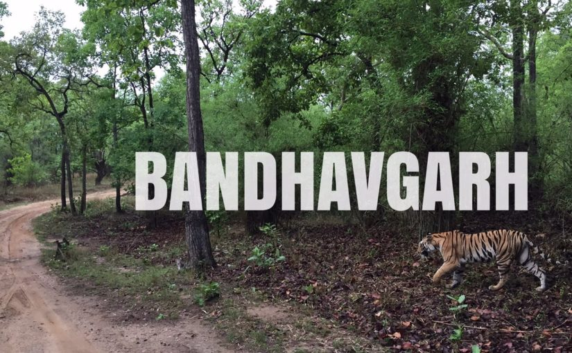 How to reach Bandhavgarh by train?