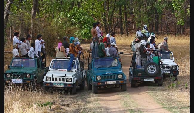 bandhavgarh-safari
