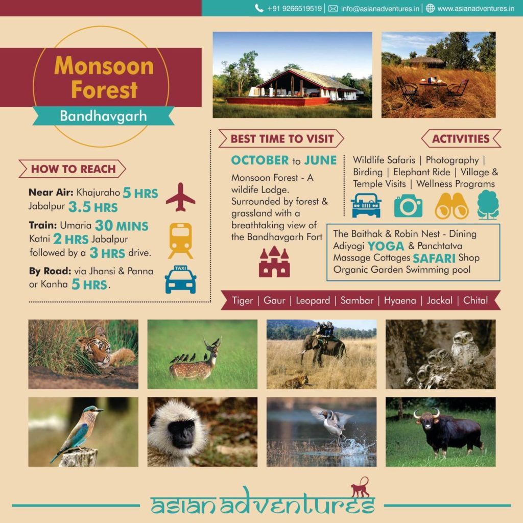 Monsoon-Forest-BandhavGarh